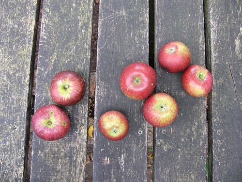 apples | by glasseyes view
