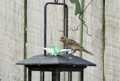Paper Sparrow 1 Photos | Would You Care to Dine With Me? (pt. 3) | 379