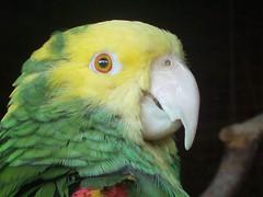 Federvieh - Birds - Pássaros