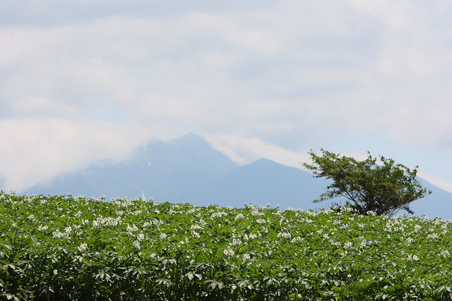 Photo:Mt. Tokachidake and flowers of potatoes By:double-h