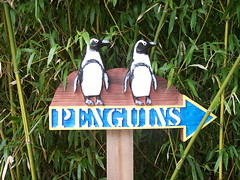 This Way to Penguins!