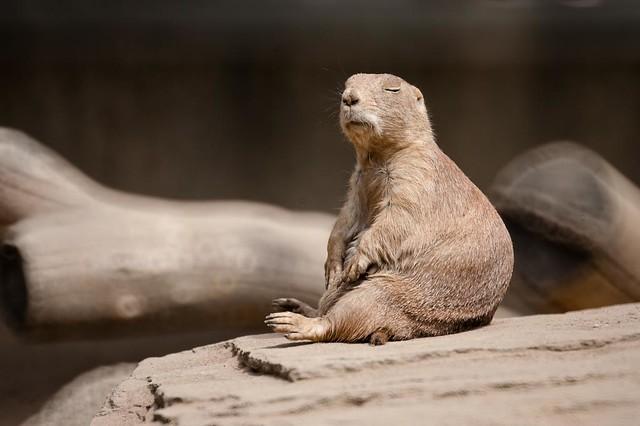 Meditation or Nap?