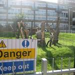 contaminated garden