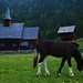 Stavkirke and horse, Lomen by Michele Bussoni2010