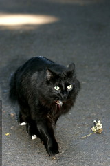 count catula on the prowl    MG 7432