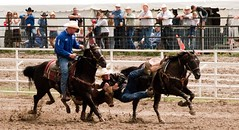 western pleasure(0.0), reining(0.0), barrel racing(0.0), bull riding(0.0), animal sports(1.0), rodeo(1.0), cattle-like mammal(1.0), western riding(1.0), chilean rodeo(1.0), team penning(1.0), bull(1.0), stallion(1.0), event(1.0), equestrian sport(1.0), tradition(1.0), sports(1.0), charreada(1.0), horse harness(1.0),