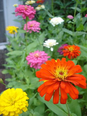 gaillardia(0.0), sulfur cosmos(0.0), annual plant(1.0), calendula(1.0), flower(1.0), plant(1.0), herb(1.0), wildflower(1.0), flora(1.0), meadow(1.0), petal(1.0),