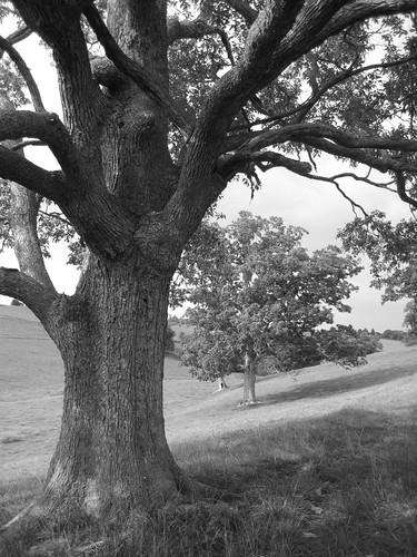 blackandwhite bw white black tree rural landscape farm kentucky hill