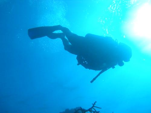 Dive (27)