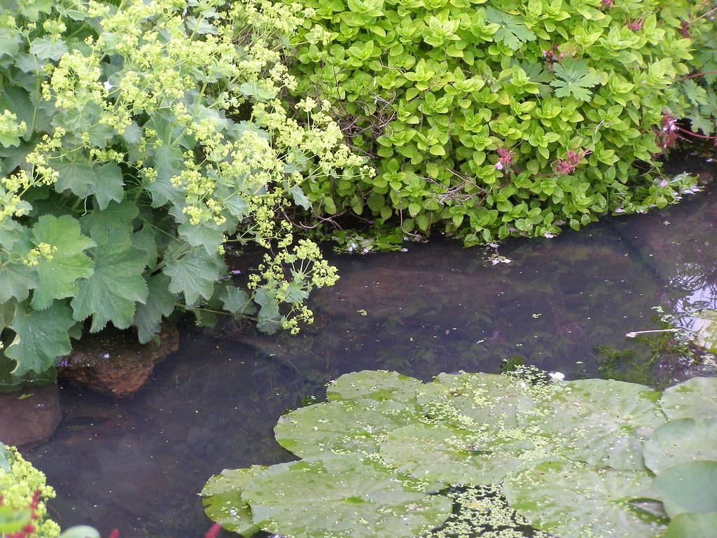 pond edge  ........... (s685)