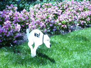 No dog poop sign outside the NYC Public Library
