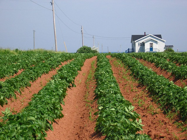 Pei potato farm ii flickr photo sharing