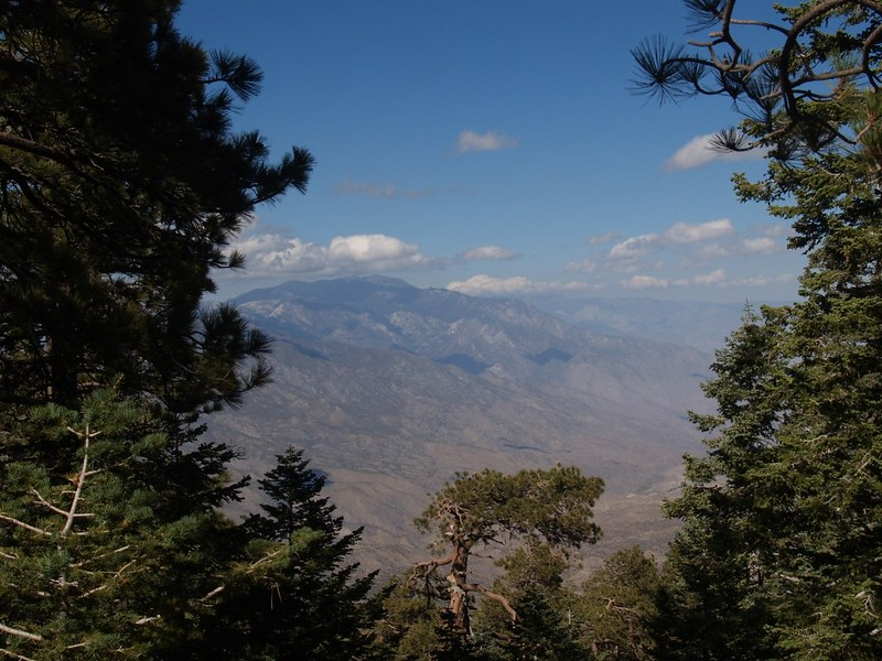 View north to Mt. San Jacinto from the Stump Spring area, near the Toro Campground