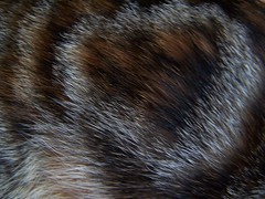 mane(0.0), textile(0.0), fur clothing(0.0), ear(0.0), whiskers(0.0), fur(1.0), brown(1.0), close-up(1.0),