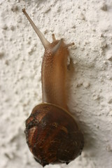 slug(0.0), animal(1.0), sea snail(1.0), molluscs(1.0), snail(1.0), macro photography(1.0), fauna(1.0), close-up(1.0),