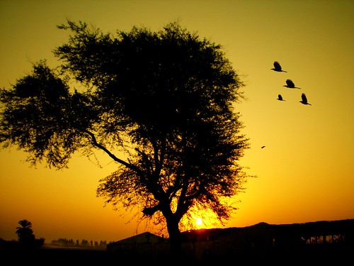 pakistan red tree birds silhouette sunrise golden olympus karachi sindh fe180 superhearts platinumheartaward iqbalkhatri