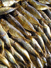 smoked fish, fish, fish, seafood, oily fish, food, shishamo,