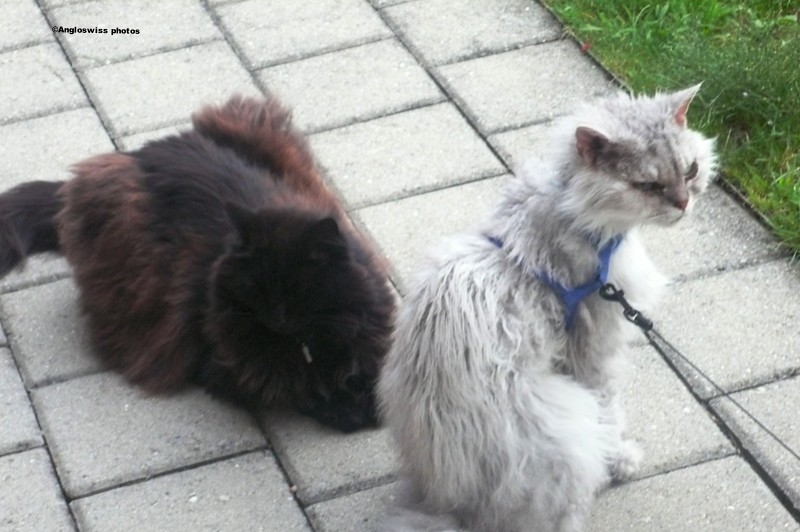 A rare photo - Fluffy and Nera together