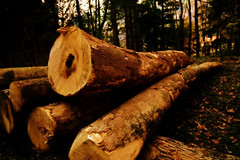 Lumber Jack's work