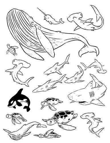 Line Drawings Of Ocean Animals : How to draw easy sea animals