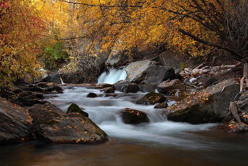 autumn motion fall water leaves yellow river utah flowing americanforkcanyon slowwater