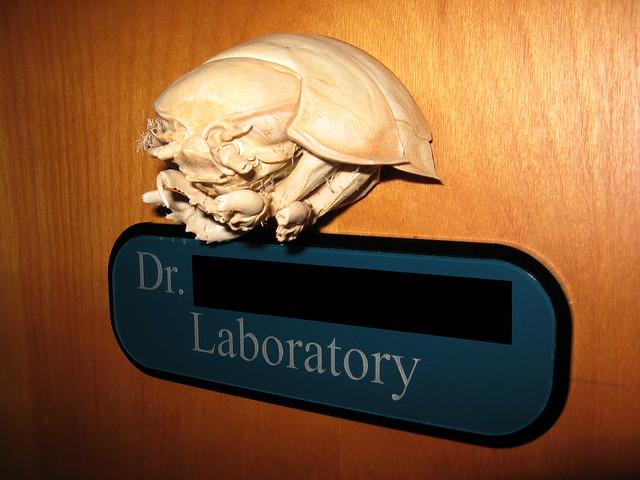 Lab a-DOOR-nment