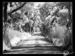 Barnbougle Road IR