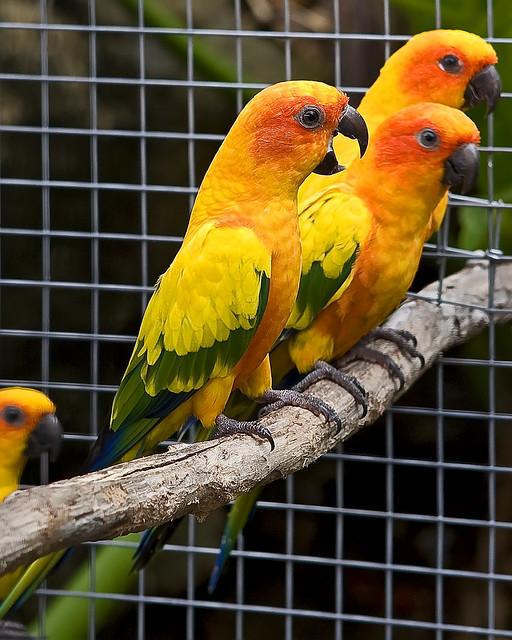 Hush That Bird Mouth!