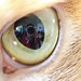 Me in a cats eye by Marquisde