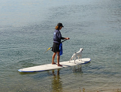 surface water sports, sports, sea, surfing, lake, water sport, stand up paddle surfing, surfboard, paddle,