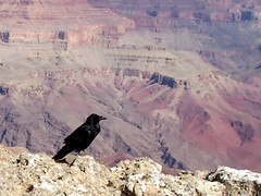 'Does wisdom perhaps appear on the earth as a raven . . . '