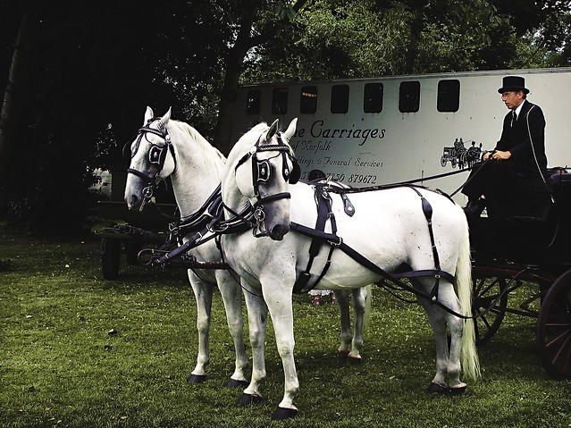funerary carriage horses