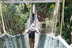 rainforest, suspension bridge, canopy walkway, rope bridge, jungle,