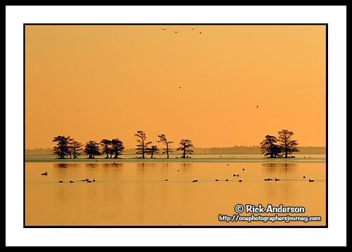 trees lake nature water birds sunrise landscapes nc wildlife lakes northcarolina swans wildliferefuge coastalnc coastalnorthcarolina lakemattamuskeet mattamuskeetnationalwildliferefuge northcarolinalandscape visitnc