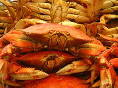 crab, animal, crab boil, seafood boil, crustacean, fish, seafood, invertebrate, dungeness crab, food,