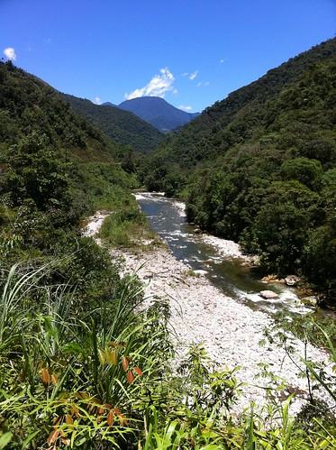 ecuador jungle zamora parquenacionalpodocarpus