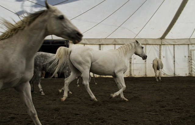 Cavalia rehearsal in San Francisco (2010)