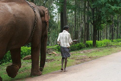 along the way, we met an elephant and her mahoot