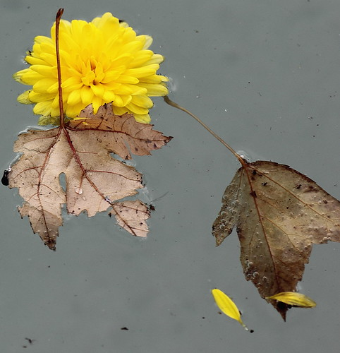flowers autumn flower fall leaves canon leaf canon60d canoneos60d fwfg