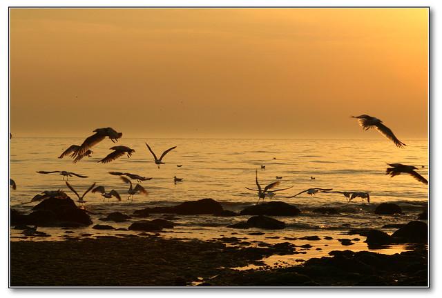 seagulls@sunset
