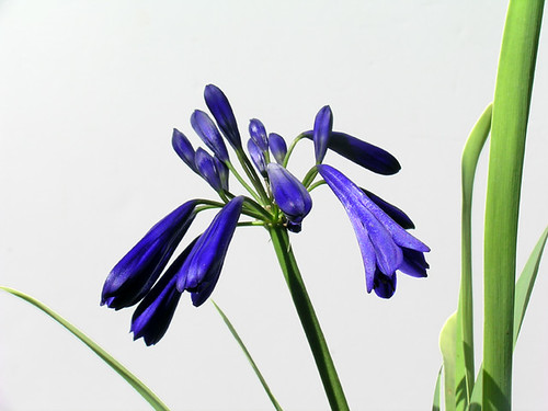 SELECTED BLUES DSCN2230