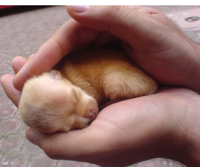 Image Result For Can A Chihuahua