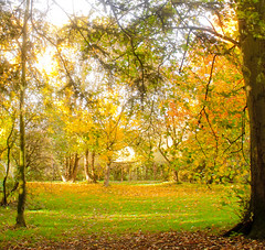 Autumn scene at Woodleigh (2 of 7)