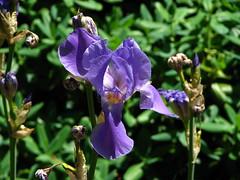 Rhododendron Garden 12