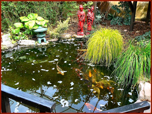 Ornamental definition meaning for Ornamental pond fish uk