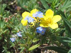 flower(1.0), plant(1.0), wildflower(1.0), flora(1.0), common tormentil(1.0), meadow(1.0),