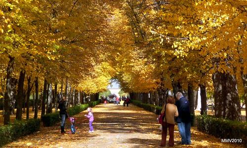 El tiempo por si mismo 1 de noviembre jardines de aranjuez for Jardines de aranjuez horario