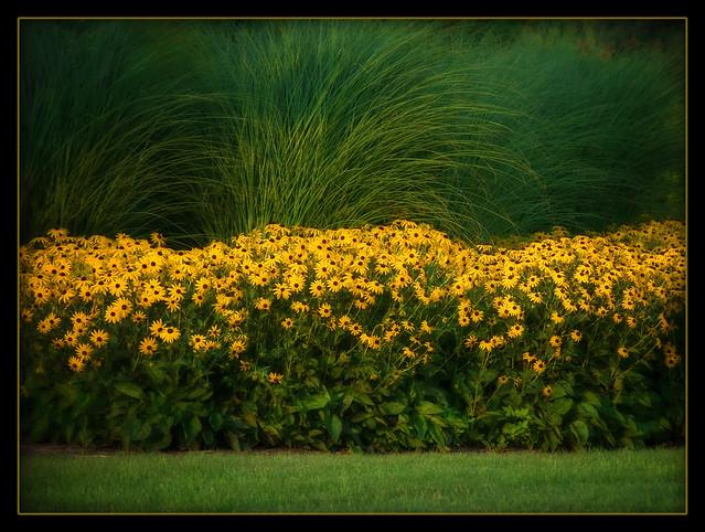 sunshine nature flickr