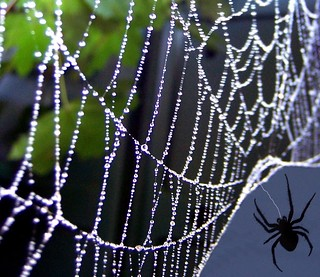 """What a Web we Weave"""