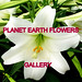 PLANET EARTH FLOWERS group gallery. Showcase galleries on display in PLANET EARTH NEWSLETTER. New Updates ck. them out. by THATS RIGHT